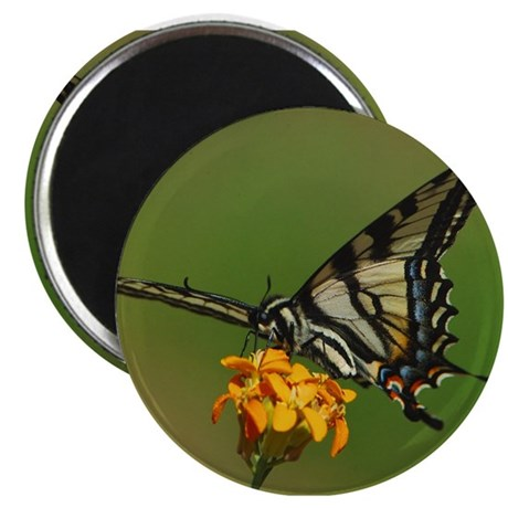 Tiger Swallowtail Butterfly 2 Magnet