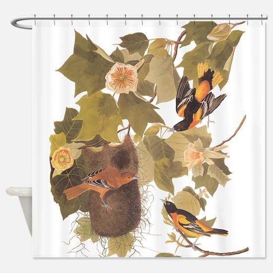 Baltimore Oriole Birds with Nest Audubon Vintage A
