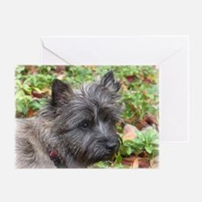 Cairn Terrier Young Man Greeting Card