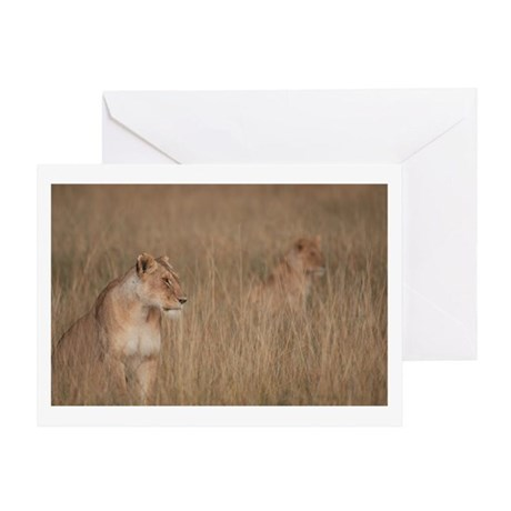LIONS STALKING IN THE MARA Greeting Card
