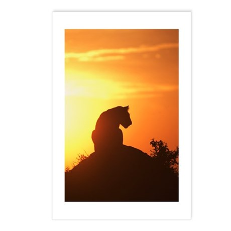 LION AT DAWN Postcards (Package of 8)