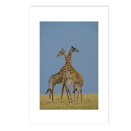 GIRAFFES FIGHT IN THE MARA Postcards (Package of 8
