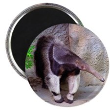 Giant Anteater Front Magnet