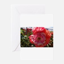 Pink And Orange Flower Greeting Cards