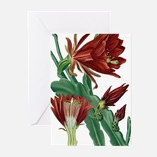 Christmas Cactus Greeting Cards (Pk of 20)
