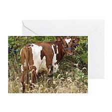 Ayrshire Cows Greeting Cards (Pk of 20)