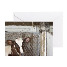 Ayrshire Cows Greeting Card