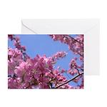 Apple Blossom Cards (Pk of 20)