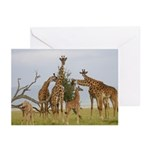 Giraffe Herd Products Greeting Cards (Pk of 10)