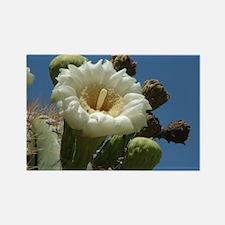 Saguaro 5 Rectangle Magnet