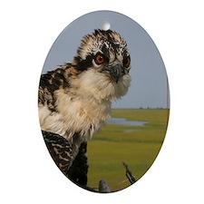 Osprey portrait Oval Ornament