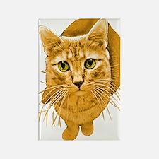 Orange Cat Rectangle Magnet