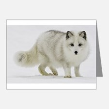Arctic Fox Blends Into His Surroundings Note Cards