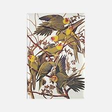 Carolina Parakeets Vintage Reproduction Magnets