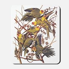 Carolina Parakeets Vintage Reproduction Mousepad