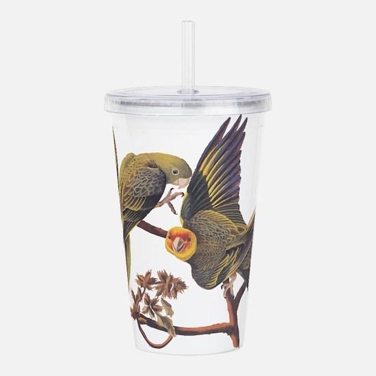 Three Parakeets from Audubon's Birds of America Ac