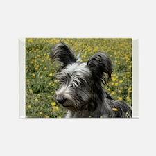 Skye Terrier In Buttercups Rectangle Magnet