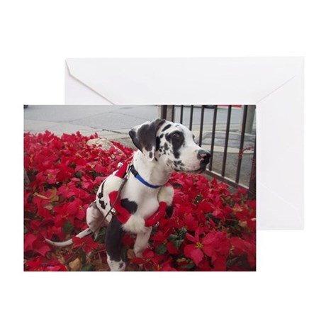 NH Pointsettia Greeting Cards (Pk of 20)