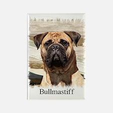 Bullmastiff- Color Head Study Rectangle Magnet (10