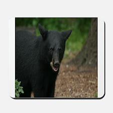 black bears Mousepad