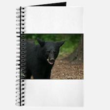 black bears Journal