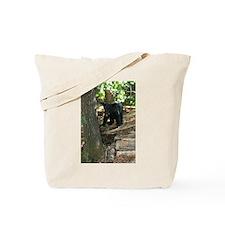 black bear cub Tote Bag