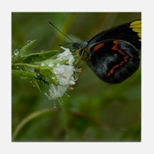 Butterfly in the Rain Tile Coaster