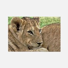 Funny Lion cub Rectangle Magnet
