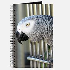 Helaine's African Gray Journal