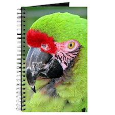 Helaine's Green Macaw Journal