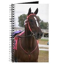 Funny Harness racing Journal