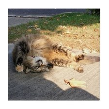 Maine Coon cat tabby rolling Tile Coaster