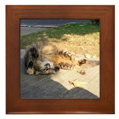 Maine Coon cat tabby rolling Framed Tile