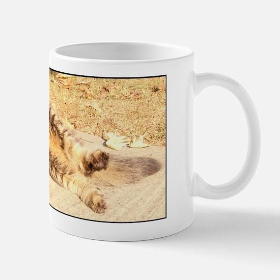 Maine Coon cat tabby rolling Mug
