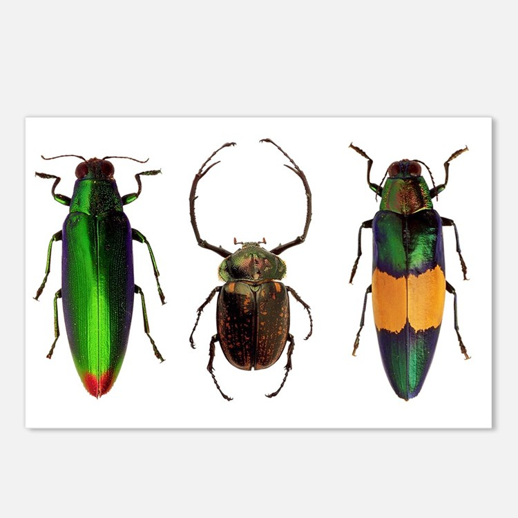 Cute Insects Postcards (Package of 8)