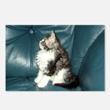 Maine Coon Kitten Postcards (Package of 8)