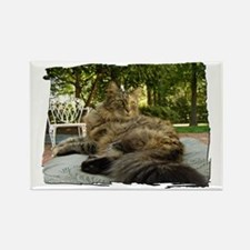 Maine Coon cat bushy tail Rectangle Magnet
