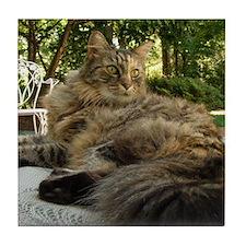 Maine Coon cat bushy tail Tile Coaster
