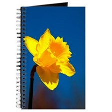 Spring Daffodil Journal