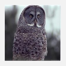 Great Gray Owl Tile Coaster
