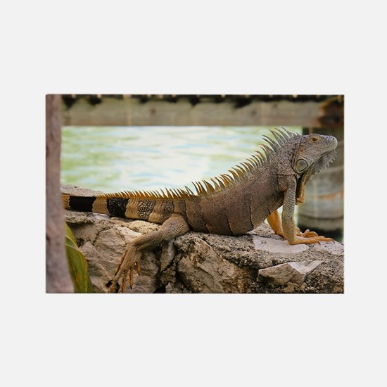 Cute Reptiles Rectangle Magnet