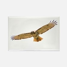 Red Tail Hawk Rectangle Magnet