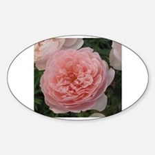 Cool Peach pink roses Sticker (Oval)