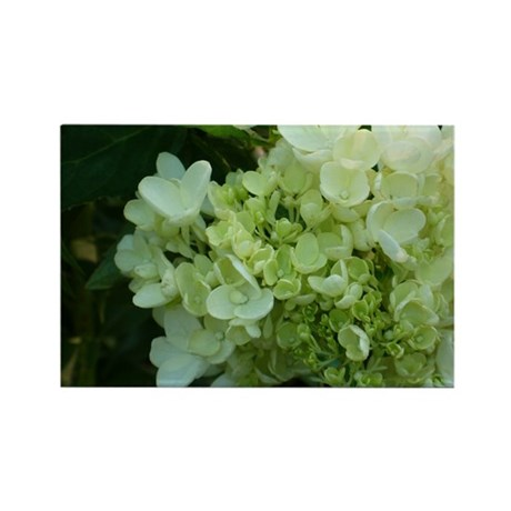 White Hydrangea Rectangle Magnet