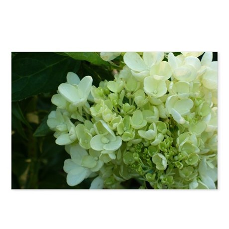 White Hydrangea Postcards (Package of 8)