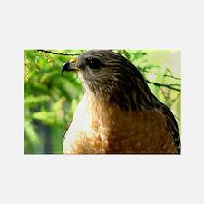 Cute Bird prey Rectangle Magnet