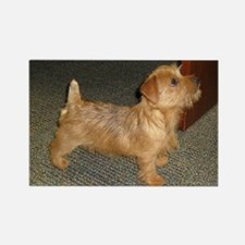 Whimsical Norfolk Terrier Puppy Rectangle Magnet