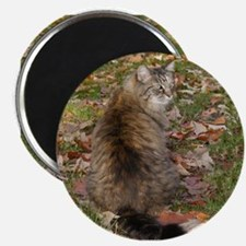 Maine Coon cat Fall leaves Magnet