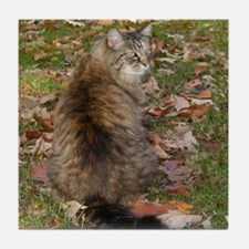 Maine Coon cat Fall leaves Tile Coaster