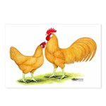Buff Leghorn Chickens Postcards (Package of 8)